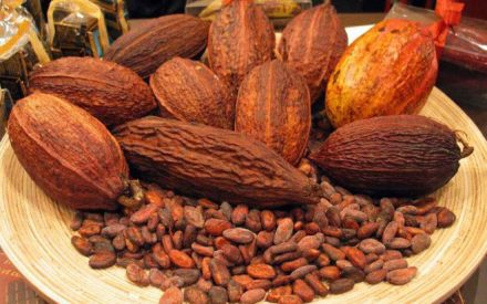 Nigeria Cocoa Exporters Gaining More Profits Due to Weak Naira